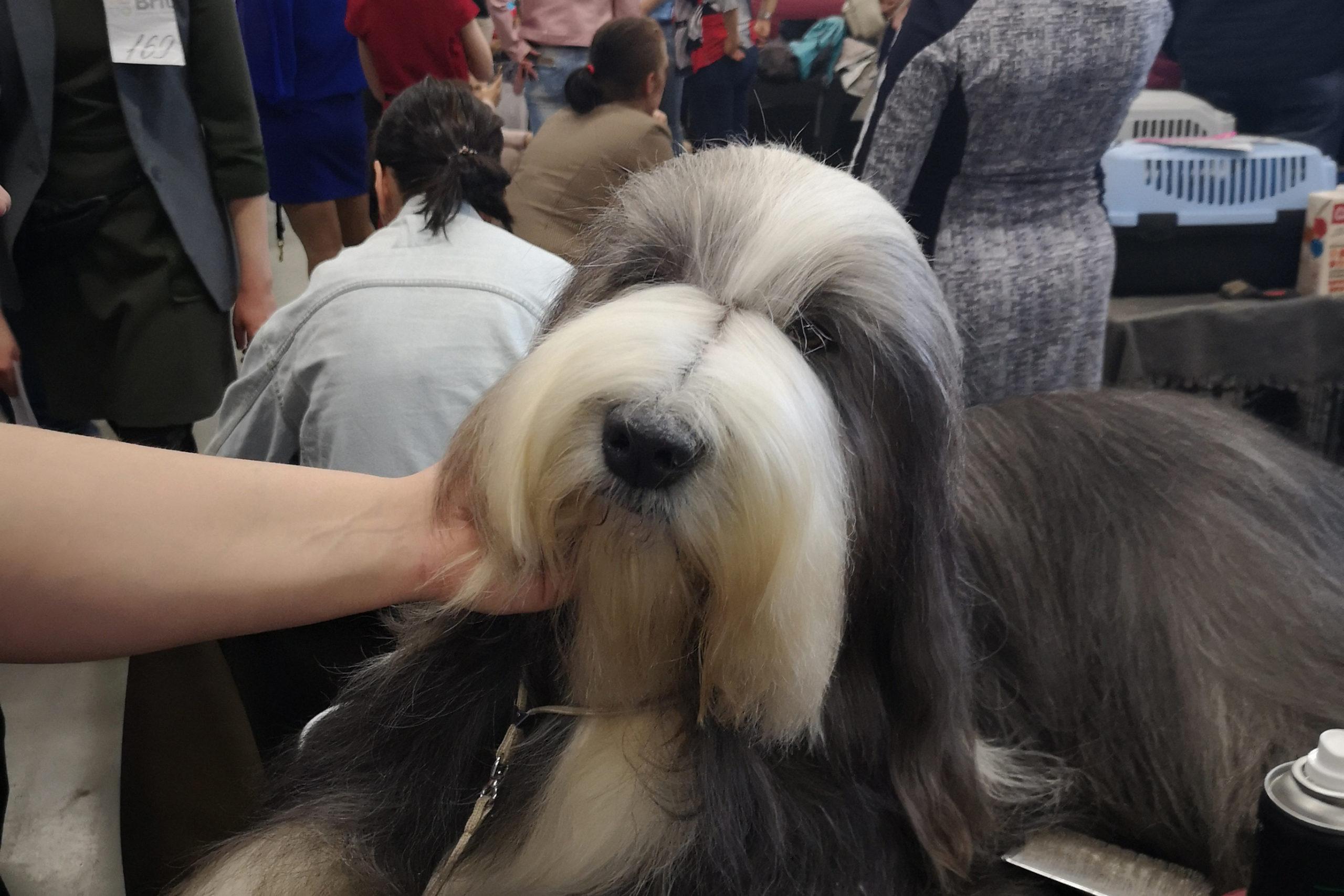 В  ВДНХ ЭКСПО УФА прошла выставка собак кинологической федерации Республики Башкортостан