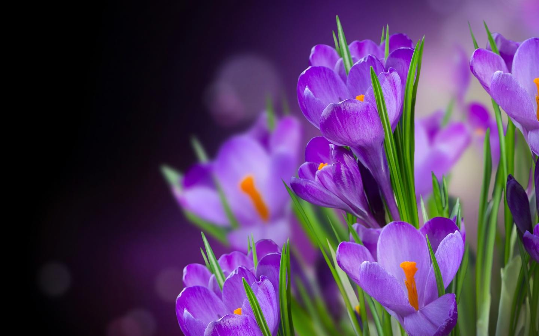 Специализированная выставка-ярмарка «Весна подарками красна!»